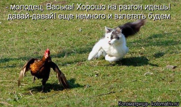 Котоматрица: - молодец, Васька! Хорошо на разгон идешь! давай-давай! еще немного и взлетать будем