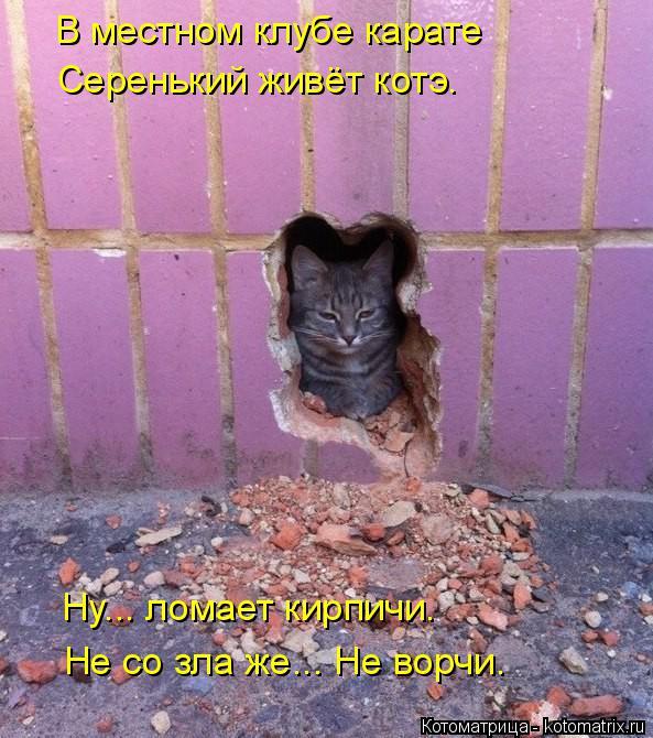 Котоматрица: В местном клубе карате Серенький живёт котэ. Ну... ломает кирпичи. Не со зла же... Не ворчи.