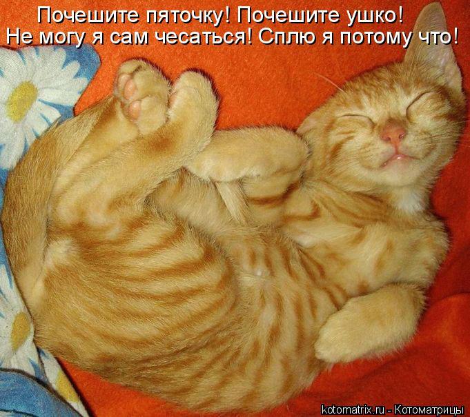 Котоматрица: Почешите пяточку! Почешите ушко!  Не могу я сам чесаться! Сплю я потому что!