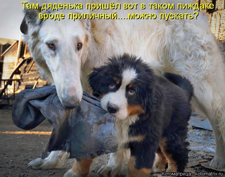 http://kotomatrix.ru/images/lolz/2014/05/22/kotomatritsa_W.jpg