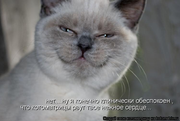 Котоматрица: нет....ну я конечно клинически обеспокоен , что котоматрицы рвут твое нежное сердце...
