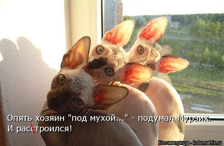 """Котоматрица: Опять хозяин """"под мухой..."""" - подумал Мурзик. И расстроился! \"""