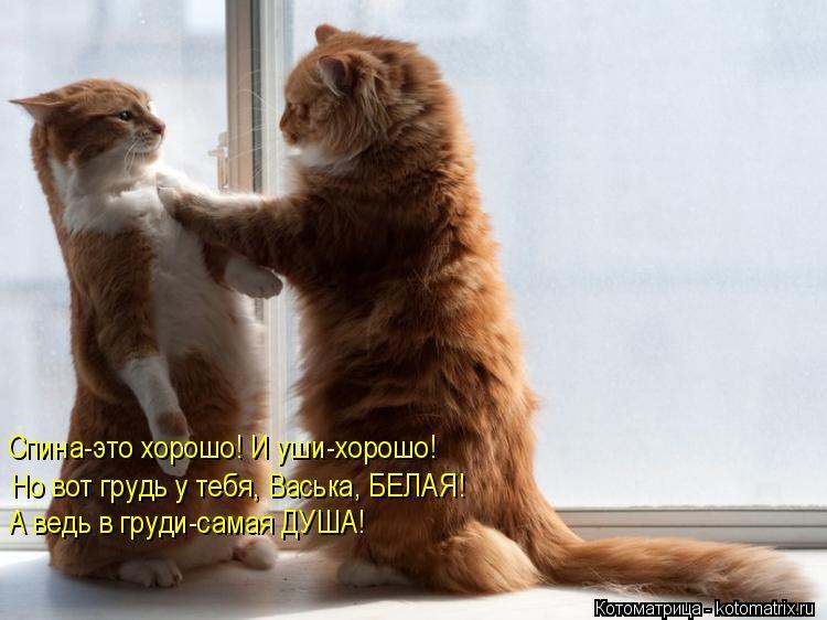 Котоматрица: Спина-это хорошо! И уши-хорошо! Но вот грудь у тебя, Васька, БЕЛАЯ! А ведь в груди-самая ДУША!