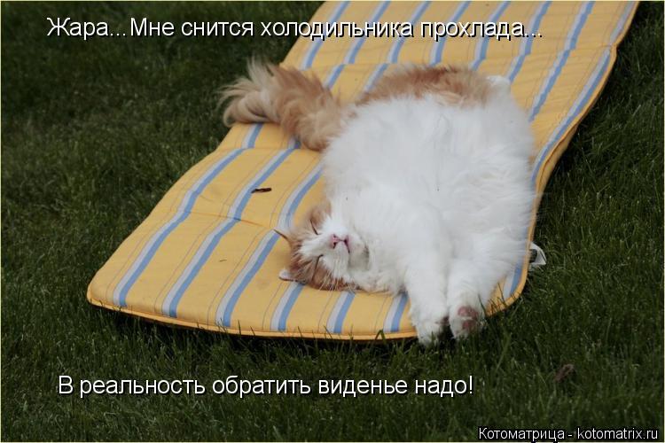 Котоматрица: Жара...Мне снится холодильника прохлада... В реальность обратить виденье надо!