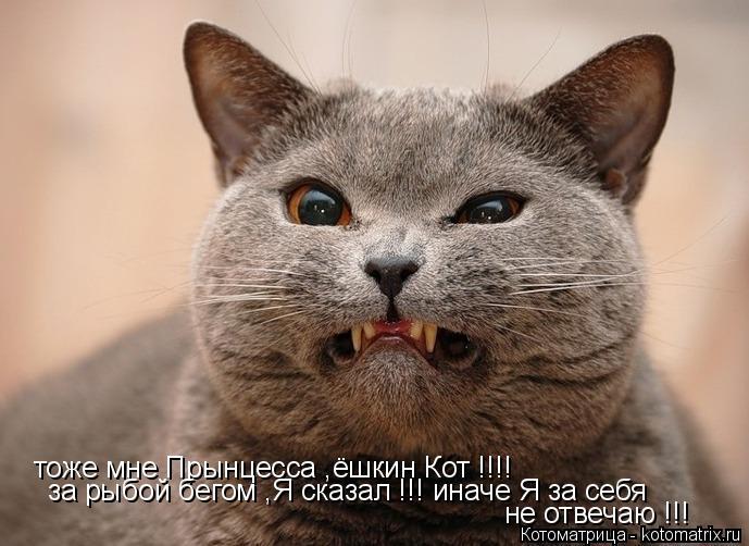 Котоматрица: тоже мне Прынцесса ,ёшкин Кот !!!! за рыбой бегом ,Я сказал !!! иначе Я за себя  не отвечаю !!!