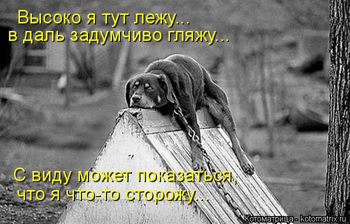 Котоматрица: Высоко я тут лежу... в даль задумчиво гляжу... С виду может показаться, что я что-то сторожу...