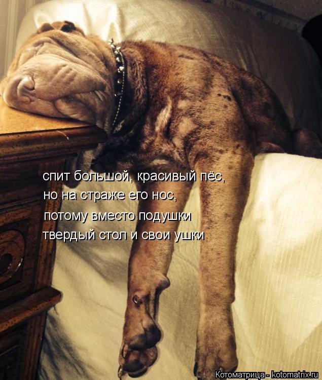 Котоматрица: спит большой, красивый пёс, но на страже его нос, потому вместо подушки твердый стол и свои ушки