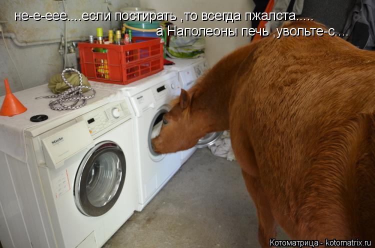 Котоматрица: не-е-еее....если постирать ,то всегда пжалста..... а Наполеоны печь ,увольте-с....