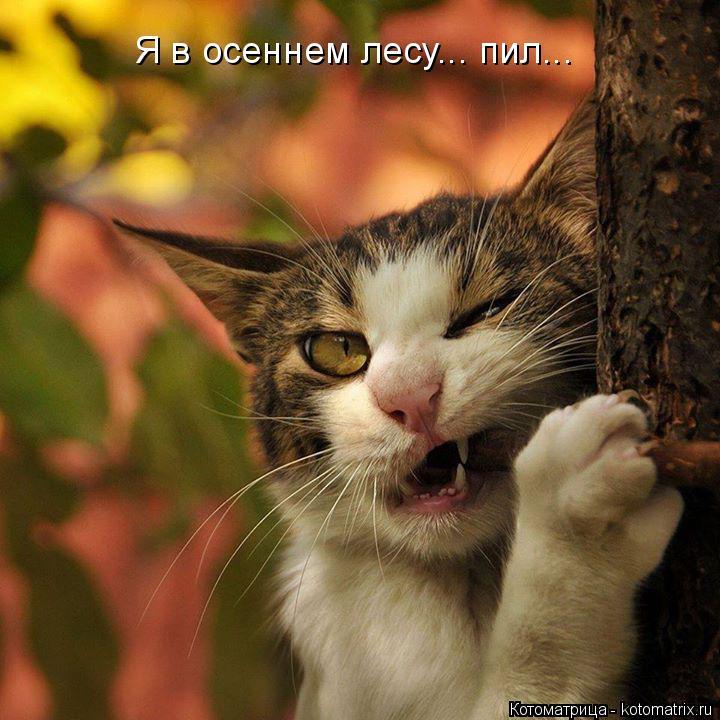 Котоматрица: Я в осеннем лесу... пил...