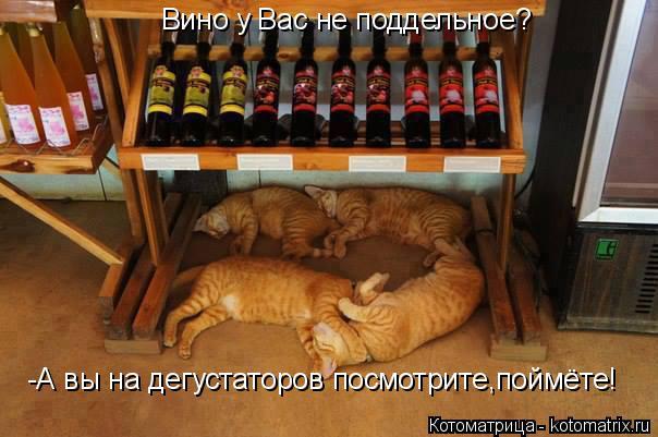 Котоматрица: Вино у Вас не поддельное? -А вы на дегустаторов посмотрите,поймёте!