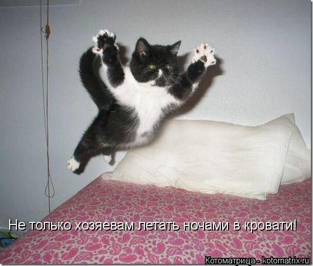 Котоматрица: Не только хозяевам летать ночами в кровати!
