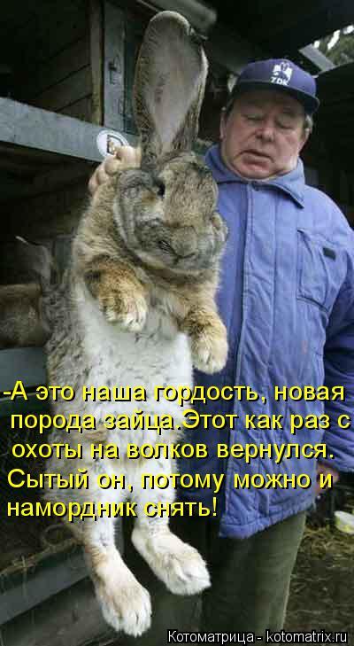 Котоматрица: -А это наша гордость, новая  порода зайца.Этот как раз с  охоты на волков вернулся.  Сытый он, потому можно и намордник снять!
