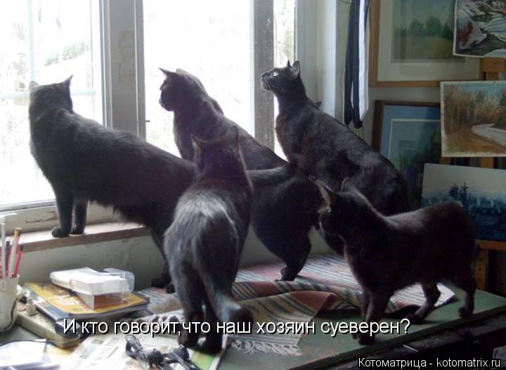 Котоматрица: И кто говорит,что наш хозяин суеверен?