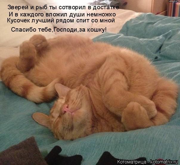 Котоматрица: Зверей и рыб ты сотворил в достатке И в каждого вложил души немножко Кусочек лучший рядом спит со мной Спасибо тебе,Господи,за кошку!