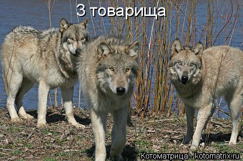 Котоматрица: 3 товарища
