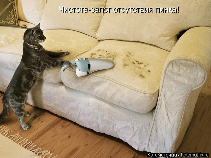 Котоматрица: Чистота-залог отсутствия пинка!