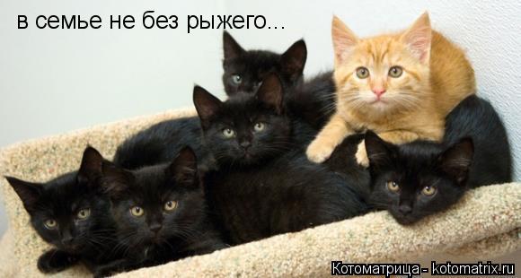 Котоматрица: в семье не без рыжего...