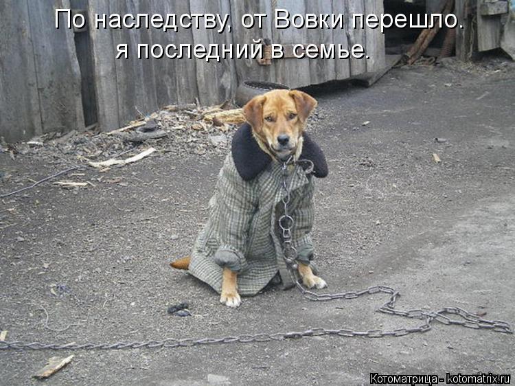 Котоматрица: По наследству, от Вовки перешло. я последний в семье.