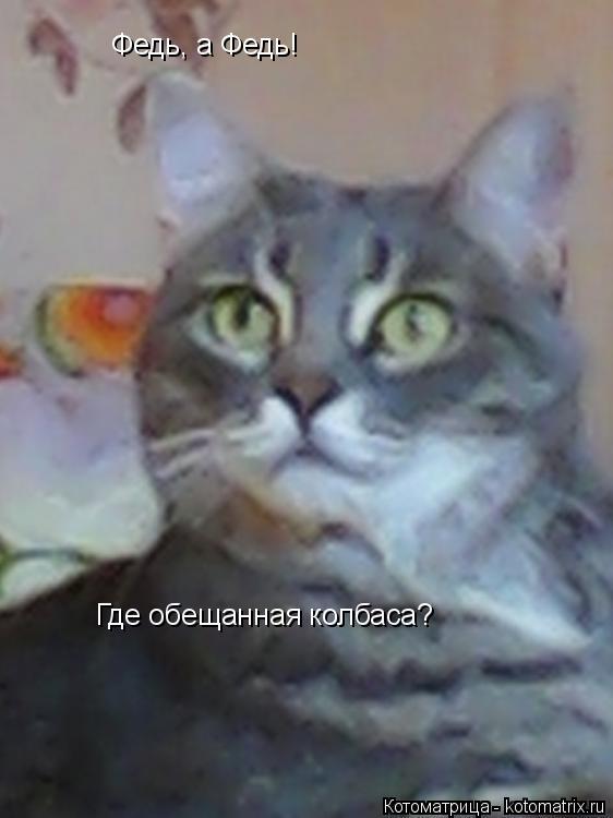 Котоматрица: Федь, а # Федь, а Федь! Федь, а Федь! Где обещанная колбаса?