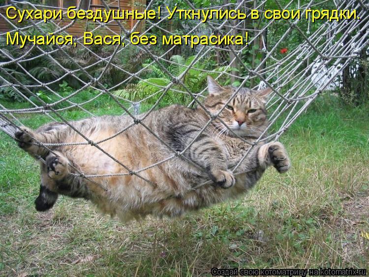 Котоматрица: Сухари бездушные! Уткнулись в свои грядки. Мучайся, Вася, без матрасика!
