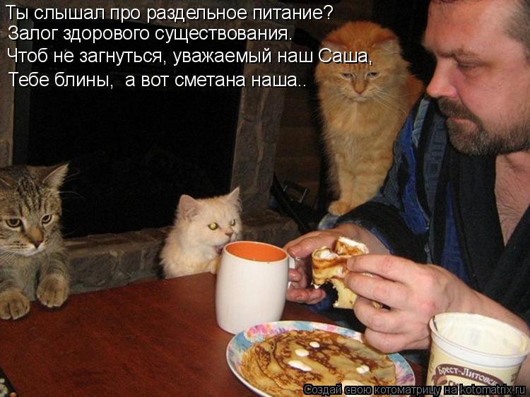 Котоматрица: Ты слышал про раздельное питание? Залог здорового существования. Тебе блины,  а вот сметана наша.. Чтоб не загнуться, уважаемый наш Саша,