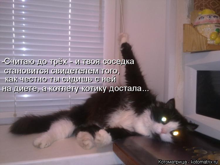 Котоматрица: как честно ты сидишь с ней на диете, а котлету котику достала... -Считаю до трёх - и твоя соседка становится свидетелем того,