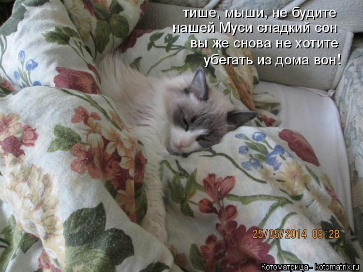 Котоматрица: тише, мыши, не будите нашей Муси сладкий сон вы же снова не хотите убегать из дома вон!