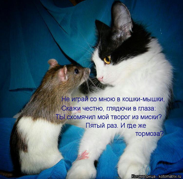 Котоматрица: Не играй со мною в кошки-мышки, Скажи честно, глядючи в глаза: ТЫ схомячил мой творог из миски? Пятый раз. И где же  тормоза?
