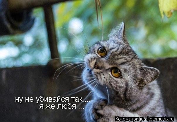 Котоматрица: ну не убивайся так.... я же любя....