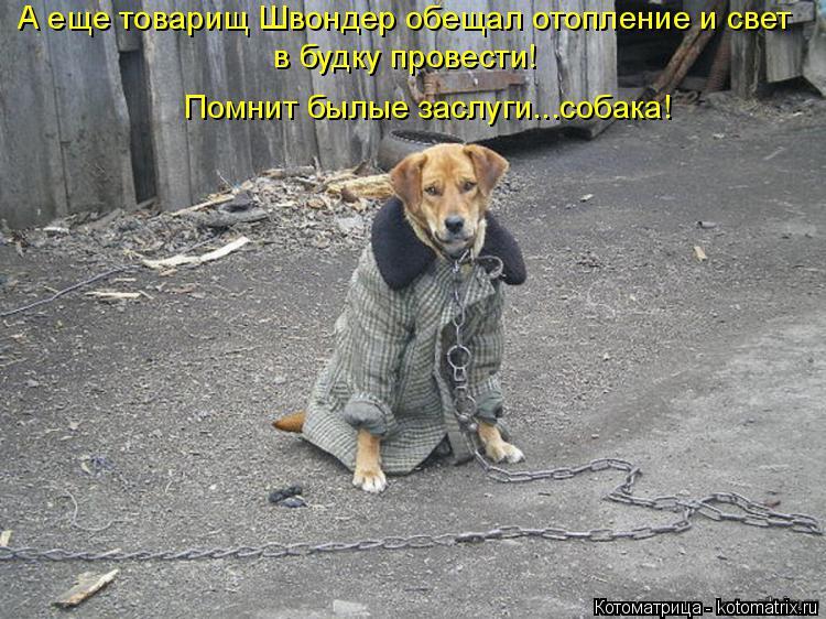 Котоматрица: А еще товарищ Швондер обещал отопление и свет в будку провести! Помнит былые заслуги...собака!