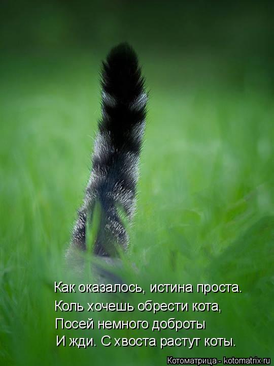 Котоматрица: Как оказалось, истина проста. Коль хочешь обрести кота, Посей немного доброты И жди. С хвоста растут коты.