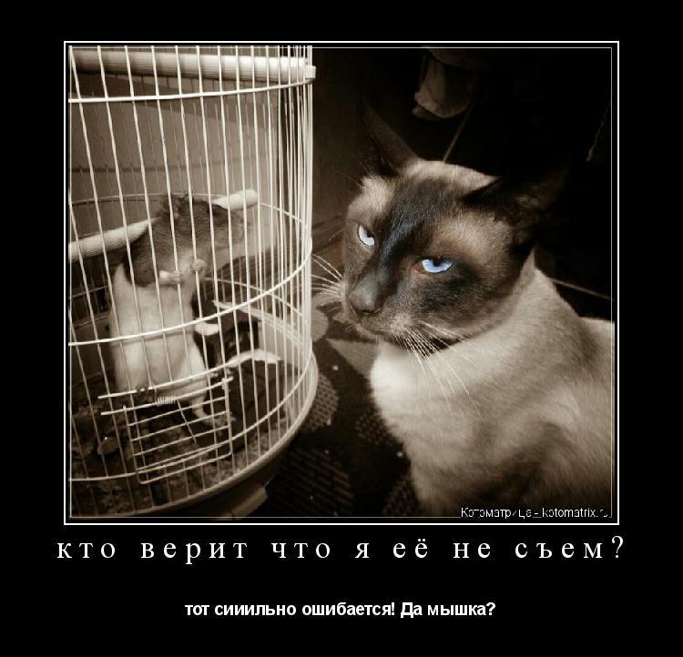 Котоматрица: кто верит что я её не съем? тот сииильно ошибается! Да мышка?