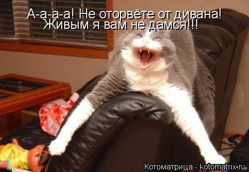 Котоматрица: А-а-а-а! Не оторвёте от дивана!  Живым я вам не дамся!!!