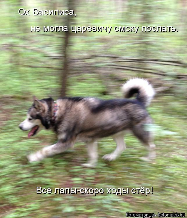 Котоматрица: Ох Василиса,  не могла царевичу смску послать. Все лапы-скоро ходы стёр!