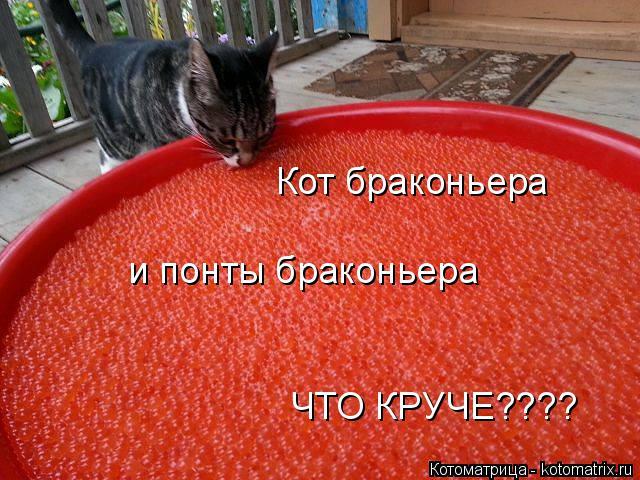 Котоматрица: Кот браконьера и понты браконьера ЧТО КРУЧЕ????
