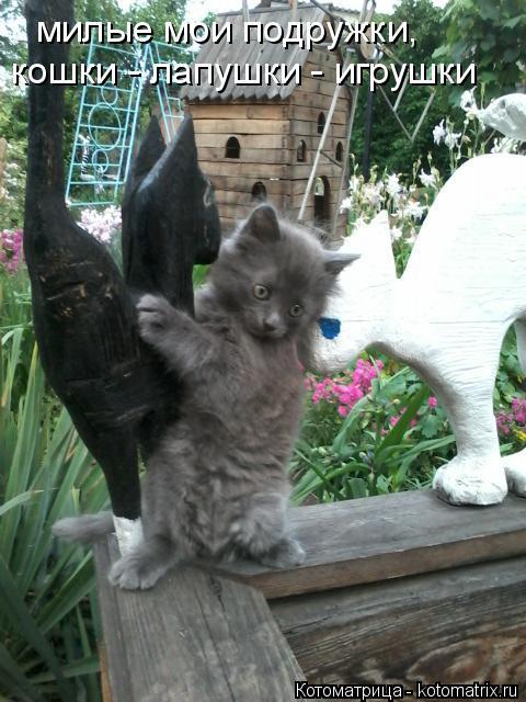 Котоматрица: милые мои подружки, кошки - лапушки - игрушки