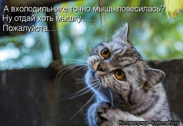 Котоматрица: А вхолодильнике точно мышь повесилась? Ну отдай хоть мышку...... Пожалуйста.....