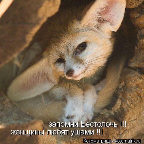 Котоматрица: запомни Бестолочь !!! женщины любят ушами !!!