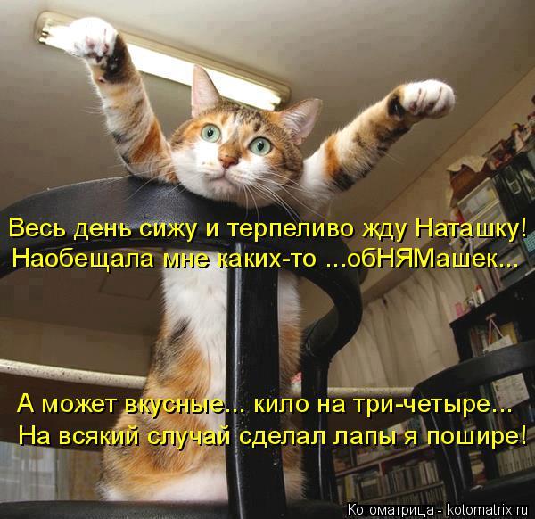 Котоматрица: Весь день сижу и терпеливо жду Наташку! Наобещала мне каких-то ...обНЯМашек... А может вкусные... кило на три-четыре... На всякий случай сделал л
