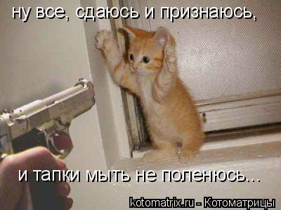 Котоматрица: ну все, сдаюсь и признаюсь, и тапки мыть не поленюсь...