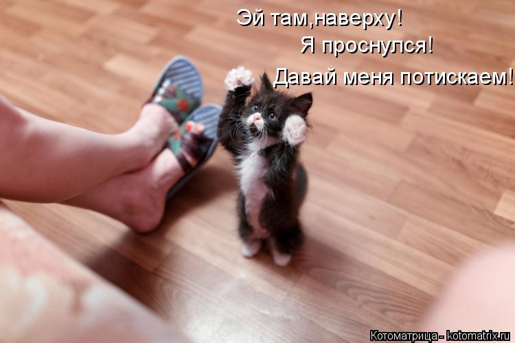 Котоматрица: Эй там,наверху! Я проснулся! Давай меня потискаем!
