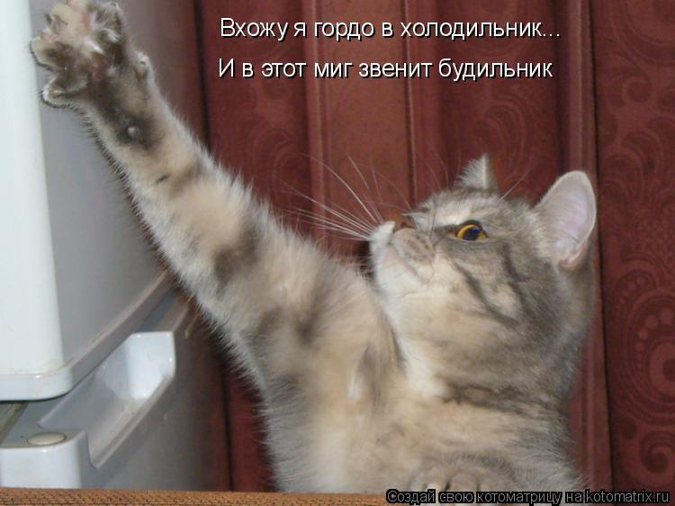 Котоматрица: Вхожу я гордо в холодильник... И в этот миг звенит будильник