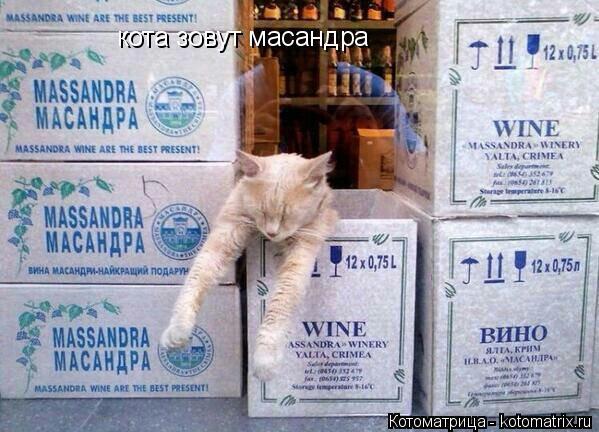 Котоматрица: кота зовут масандра