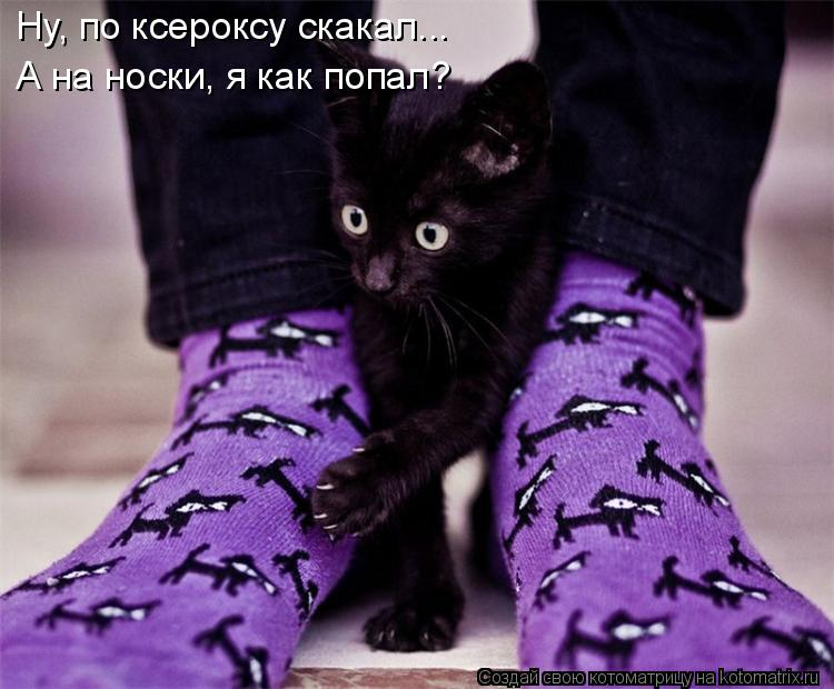 Котоматрица: Ну, по ксероксу скакал... А на носки, я как попал?