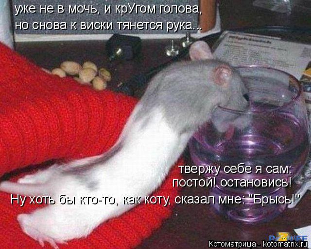 """Котоматрица: но снова к виски тянется рука... твержу себе я сам: постой! остановись! уже не в мочь, и крУгом голова, Ну хоть бы кто-то, как коту, сказал мне: """"Б"""