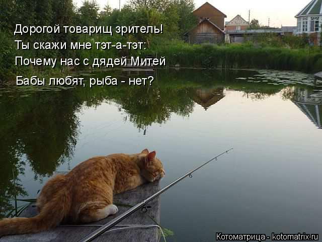Котоматрица: Дорогой товарищ зритель! Ты скажи мне тэт-а-тэт: Почему нас с дядей Митей Бабы любят, рыба - нет?