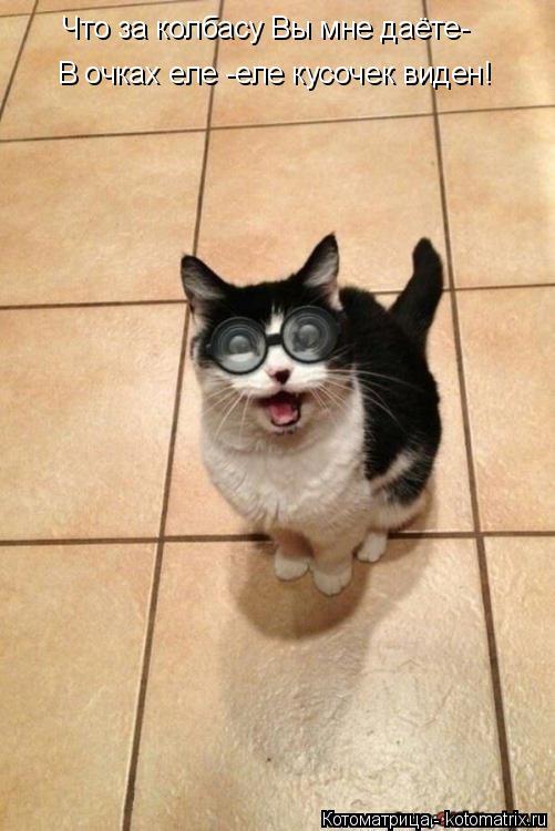Котоматрица: Что за колбасу Вы мне даёте- В очках еле -еле кусочек виден!