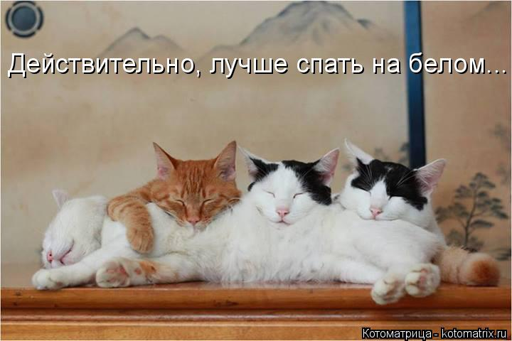 Котоматрица: Действительно, лучше спать на белом...