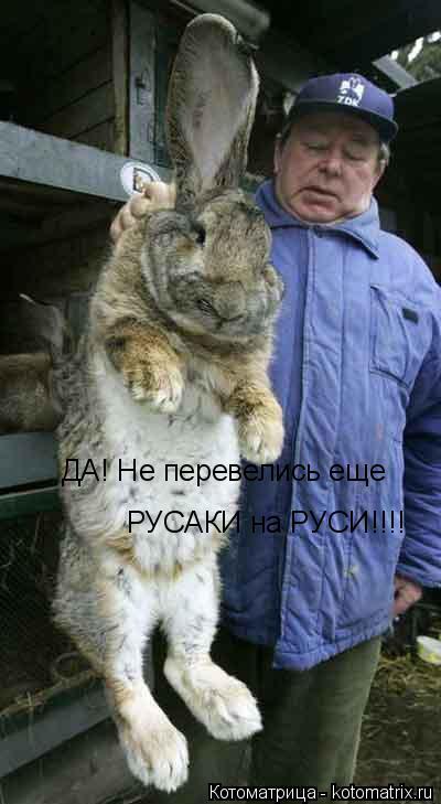 Котоматрица: ДА! Не перевелись еще РУСАКИ на РУСИ!!!!
