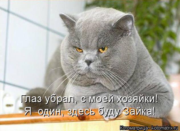 Котоматрица: Глаз убрал, с моей хозяйки! Я  один, здесь буду Зайка!